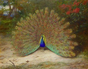 Peacock and Peacock Butterfly