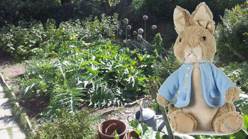 hill top peter rabbit exclusive